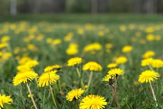 Är du pollenallergisk?